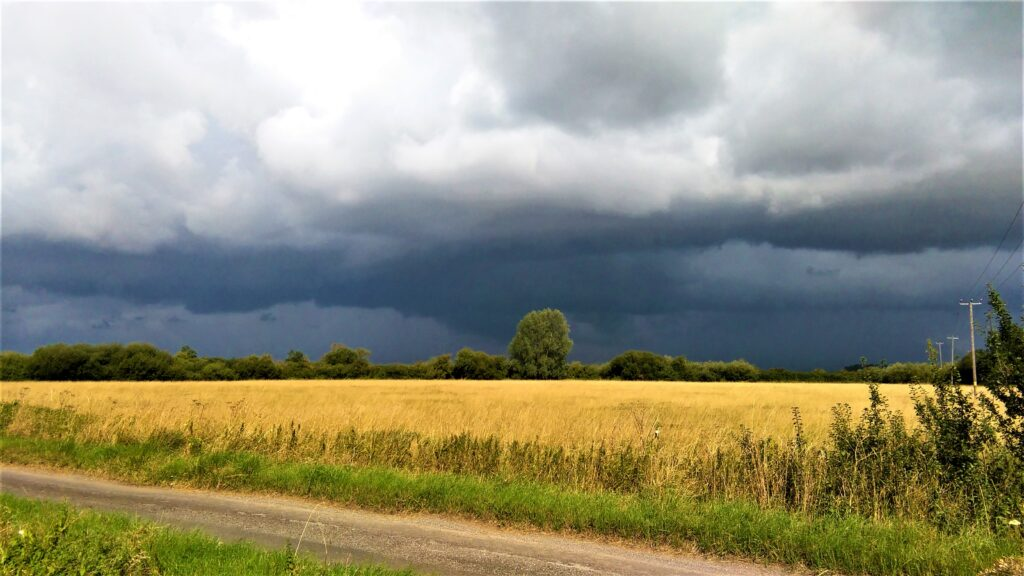 A stormy, cloudy horizon behind a field full of ripe wheat.